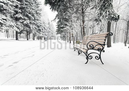 bench in the winter park