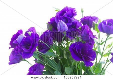 bouquet  of  violet eustoma flowers