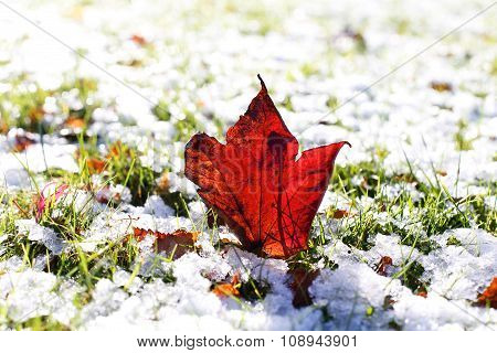 Last Autumn Leaf Standing In First Snow Of Winter