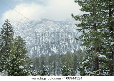 snow and forest