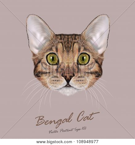 Vector Illustrated Portrait of brown Bengal Cat with green eyes