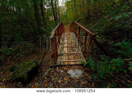 The bridge in the forest