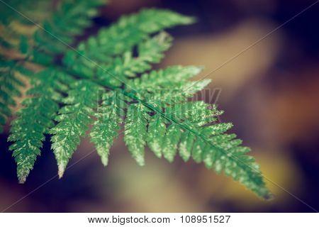 Fern in the Woods in Autumn