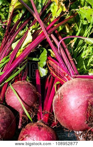 Beets (3)