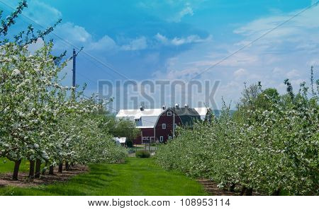 Red Barn At The End Of Apple Tree Row