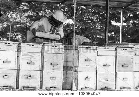 older beekeepers