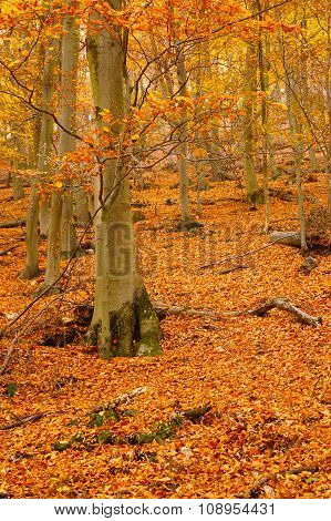 Autumn Leafy Woods Vertical