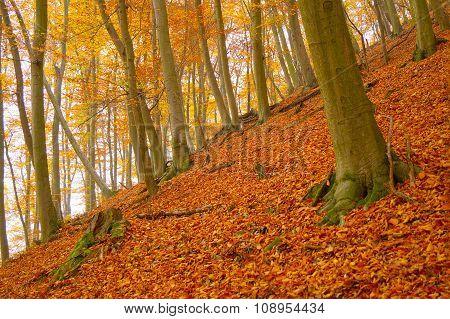 Autumn Leafy Woods