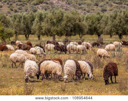 Organic Farming In Greece