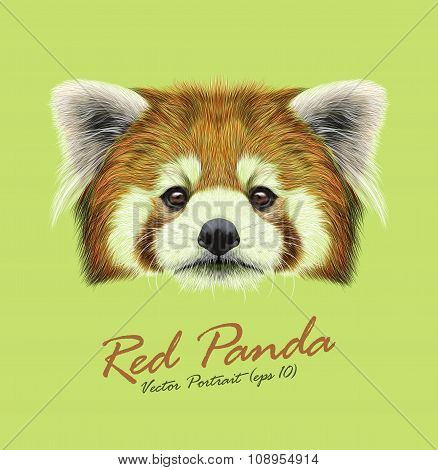 Vector Illustrated Portrait of Red Panda