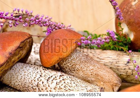 orange-cap boletus, background with mushrooms