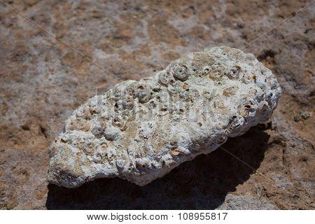 Fossilized Seashells On The Beach