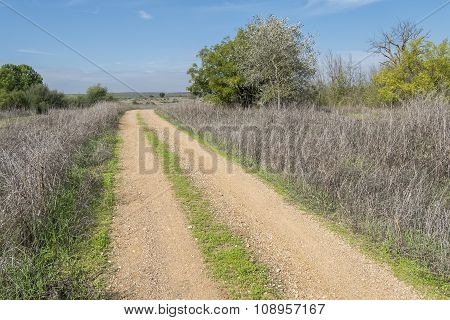 Rural Dirt Road In The Middle Of Nature