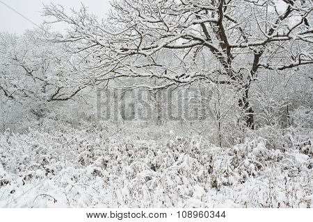 Snowfall on trees in park.