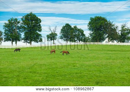 Green Pastures Of Horse Farms. Country Summer Landscape.