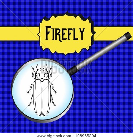 insect in magnifier. Firefly beetle Lampyridae. Sketch of Firefly beetle.