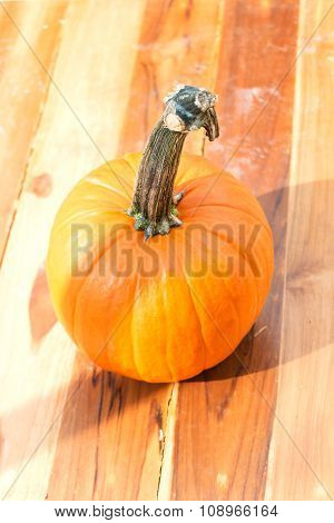 Pumpkin With Shadow