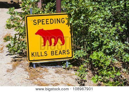Danger Sign, Speeding Kills Bears