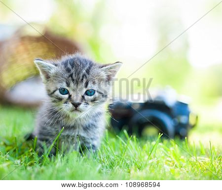 little cat, outdoor