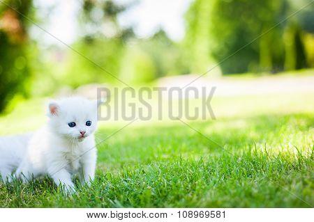little cat, outdoor,