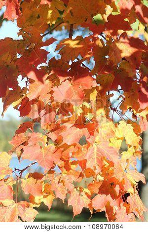 Leaves on Tree-Color Change