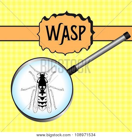 insect in magnifier.Wasp. Sketch of Wasp. Wasp Design for coloring book.  hand-drawn Wasp.