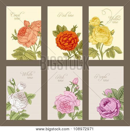 Set of vintage vector vertical label with flowering garden roses.