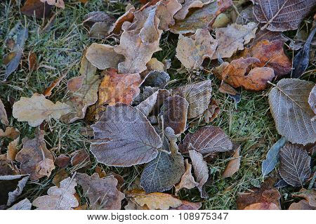 Frosted Brown Leaves