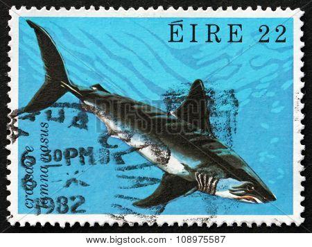 Postage Stamp Ireland 1982 Porbeagle Shark