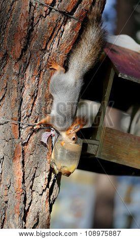 Beautiful Portrait Of A Squirrel
