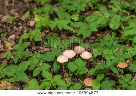 Mushrooms And Fresh Green Wild Plants