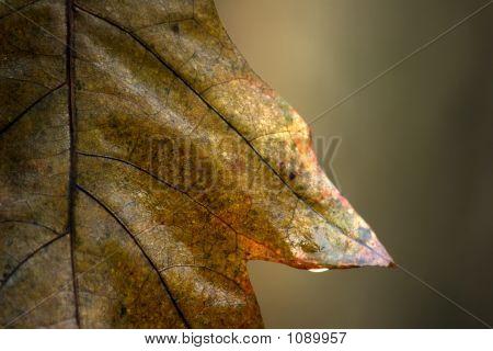 Autumnal Wet Leaf