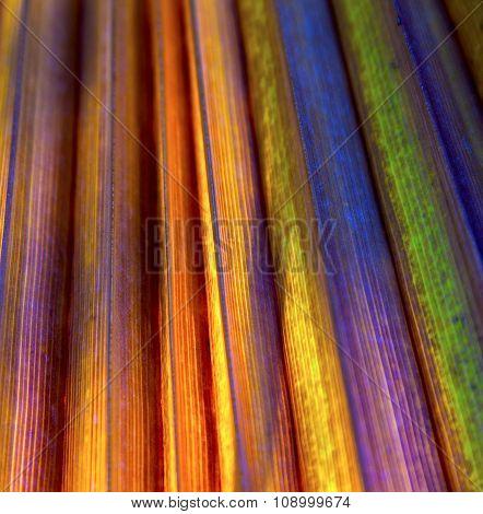 Beautiful Pattern Of Palm Trees Gives A Harmonic Feeling