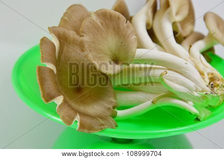 Indian oyster mushroom on weighing scale