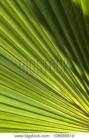 Beautiful Pattern Of Palm Trees