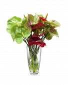 foto of flower arrangement  - Anthurium - JPG