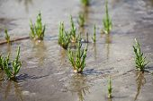 stock photo of marshlands  - A close - JPG