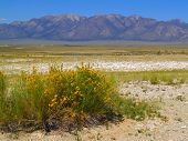 stock photo of sagebrush  - Sagebrush and a dry lake bed with mountains beyond taken within the Great Basin Desert in the Owens Valley - JPG