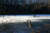 foto of bluegill  - a lone man ice fishing out on a frozen lake - JPG