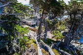 Постер, плакат: Cypress Point 17 Mile Drive