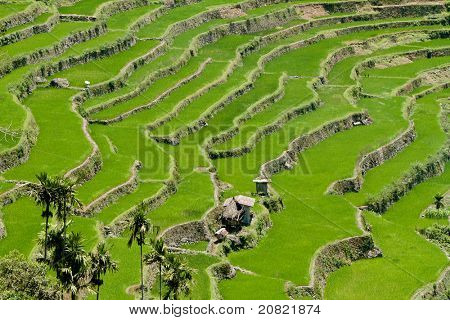 2000-year old Batad Rice Terraces, Ifugao Province, Philippines. UNESCO World Heritage