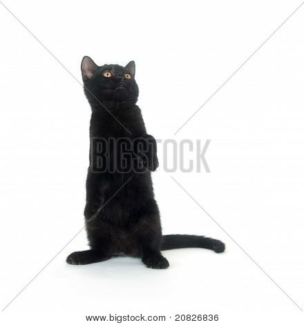 hübsch Katze
