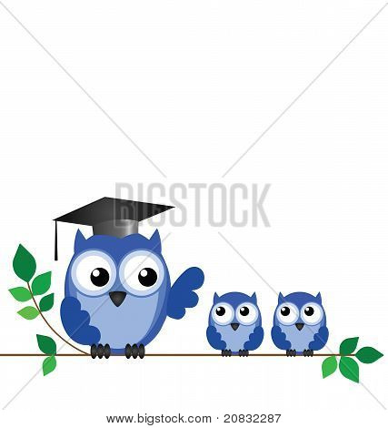 Owl teacher branch
