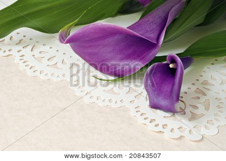 Elegant purple calla lilies on decorative lacy paper over parchment paper with copy space.  Macro with shallow dof.