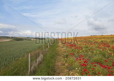 Contrasting Landscape
