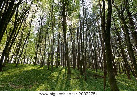 Forest In Spring Time