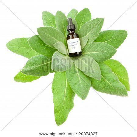 Verbascum Thapsus Homeopathic Medicine