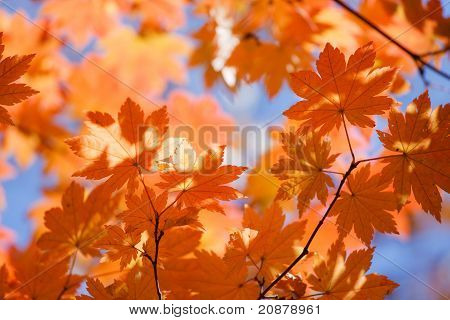 Russian Fall Colors