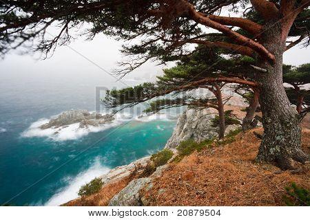 Russia, Primorye, Centennial Pine On A Rocky Beach