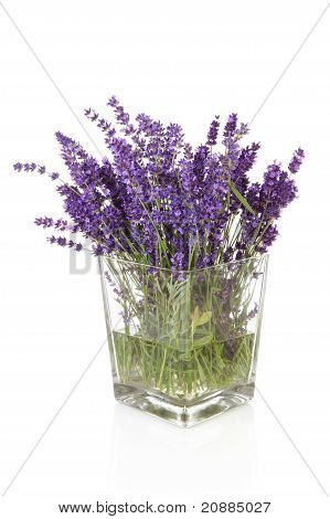 Bouquet Of Plukked Lavender In Vase
